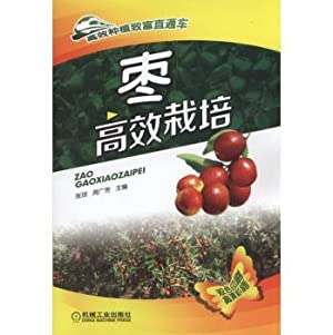 Jujube efficient cultivation(Chinese Edition): ZHANG QIONG .