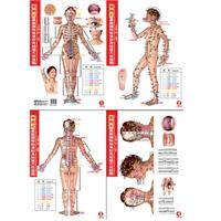 Portable latest international standards for acupuncture meridian points charts (women live version)...