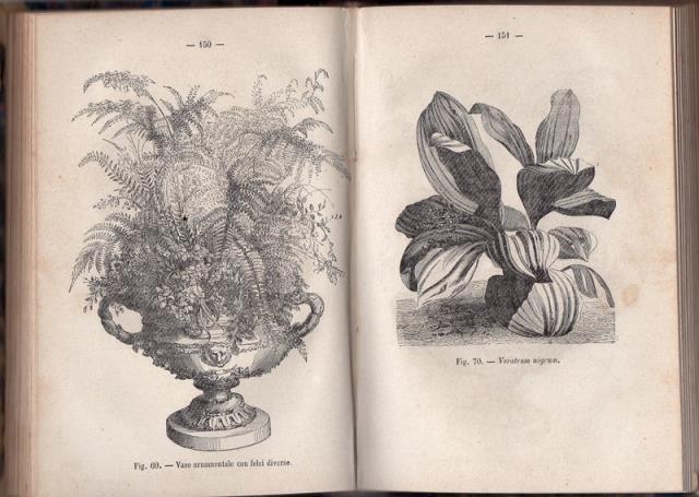 Manuale del giardiniere floricoltore e decoratore di for Manuale progettazione giardini