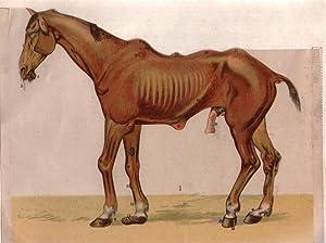 Il cavallo malato. Mali e difetti più comuni con manifestazioni esterne; mezzi più ...