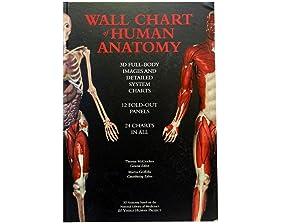 Wall Chart of Human Antomy: McCracken Thomas and
