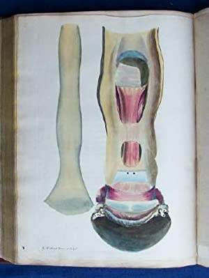Observations on the Structure, Oeconomy, and Diseases of the Foot of the Horse and on the ...
