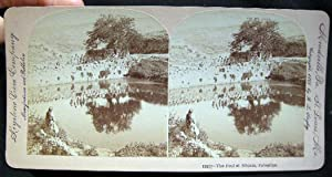 Photographic Stereoview of The Pool of Siloam, Palestine: Palestine)