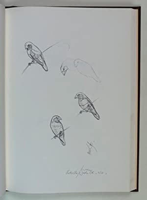 Pencil Drawings 1969-78 Signed by Frank Morris Foreword by David Dridan.: Morris, Frank T