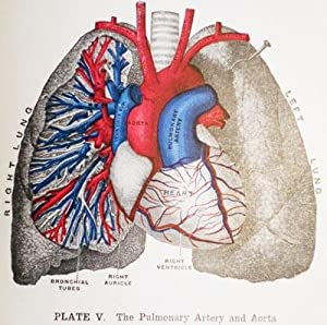 The Practical Guide to Health: A Popular Treatise on Anatomy, Physiology, and Hygienve, with a ...