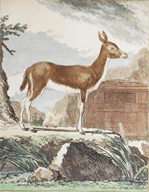 Le Ritbok Femelle [1 handcolored copperplate engraving of an antelope from Buffon's Histoire Natu...