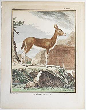 Le Ritbok Femelle [1 handcolored copperplate engraving of an antelope from Buffon's Histoire ...