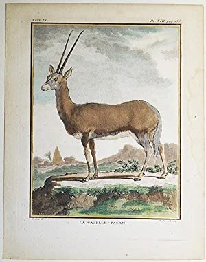Le Gazelle-Pasan [1 handcolored copperplate engraving of a gazelle from Buffon's Histoire ...