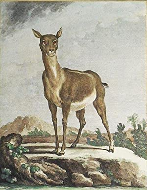 L'Antilope Femelle [1 handcolored copperplate engraving of an antelope from Buffon's Histoire Nat...
