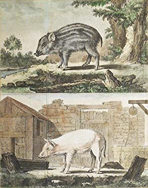 Le Marcassin [and] Le Cochon de Lait [1 handcolored copperplate engraving of a wild boar and a do...