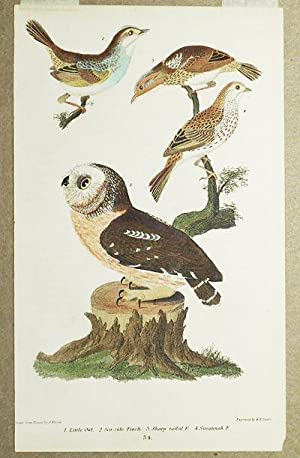 1 handcolored copperplate engraving of an owl and three finches [plate 34 from American Ornithology...