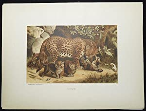 Leopard [chromolithograph printed by L. Prang & Co.]