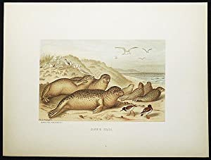 Common Seals [chromolithograph printed by L. Prang