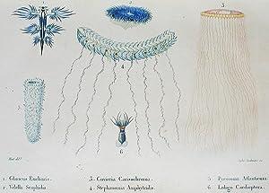 Lettres à Sophie sur la Physique, la Chimie, et l'Histoire Naturelle: avec des Notes ...
