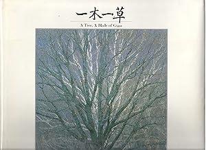 A TREE, A BLADE OF GRASS: Maeda, Shinzo