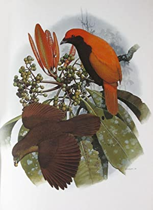 THE BIRDS OF PARADISE AND BOWER BIRDS
