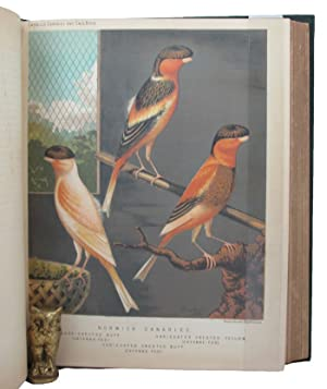 THE ILLUSTRATED BOOK OF CANARIES AND CAGE-BIRDS, BRITISH AND FOREIGN