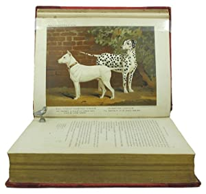 THE ILLUSTRATED BOOK OF THE DOG