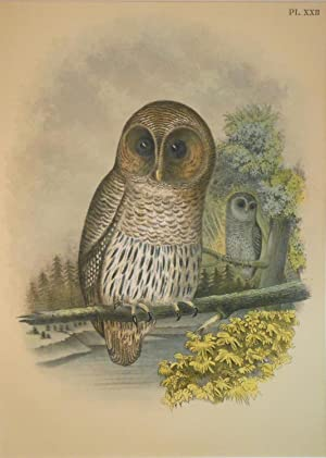 Studer's Popular Ornithology, The Birds of North America. Plate Number XXII: The Barred Owl (Syrn...