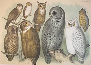 Studer's Popular Ornithology, The Birds of North America. Plate Number CXIII: Hawk Owl or Day Owl...