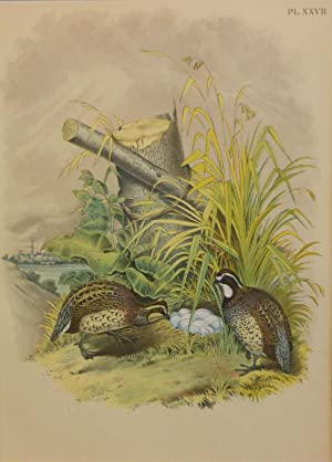 Studer's Popular Ornithology, The Birds of North America. Plate Number XXVII: American Quail or P...