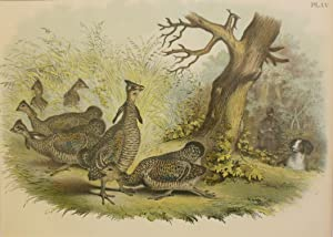 Studer's Popular Ornithology, The Birds of North America. Plate Number LV: Pinnated Grouse or Pra...
