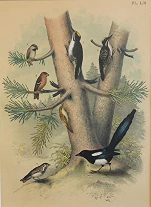 Studer's Popular Ornithology, The Birds of North America. Plate Number LIII: Black-backed Three-t...