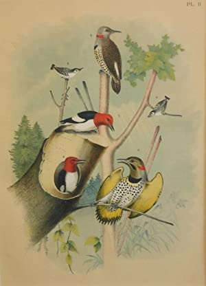 Studer's Popular Ornithology, The Birds of North America. Plate Number II: The Gold-winged Woodpe...