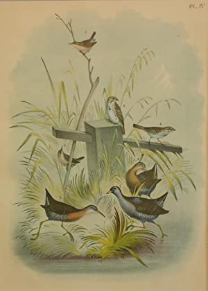 Studer's Popular Ornithology, The Birds of North America. Plate Number IV: The Rail, The Virginia...