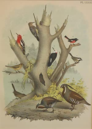 Studer's Popular Ornithology, The Birds of North America. Plate Number LXXXIX: Brown-headed Woodp...
