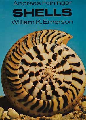 Shells: Feininger, A. &