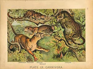 Original Antique 1880 Chromolithograph JAPANESE PANTHER OCELOT COUGAR JAGUAR [ix]