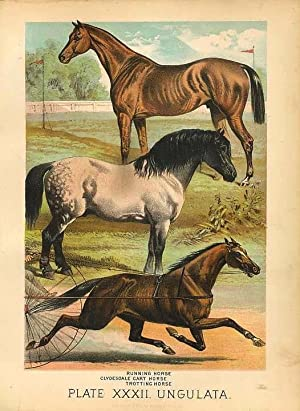 Original Antique 1880 Chromolithograph RUNNING HORSE, CLYDESDALE, TROTTING HORSE [xxxii]