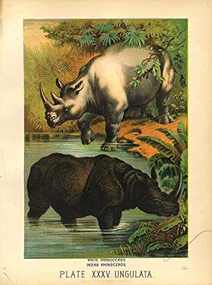 Original Antique 1880 Chromolithograph WHITE RHINOCEROS, INDIAN RHINOCEROS [xxxv]