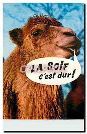 Carte Postale Moderne Animaux Humoristiques Chameau