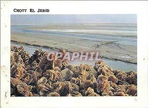 Carte Postale Moderne Tunisie Roses de sable
