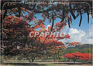 Carte Postale Moderne Martinique flamboyants sur la route du vauclin