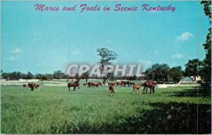 Carte Postale Moderne Mares and Foals In Beautiful Kentucky