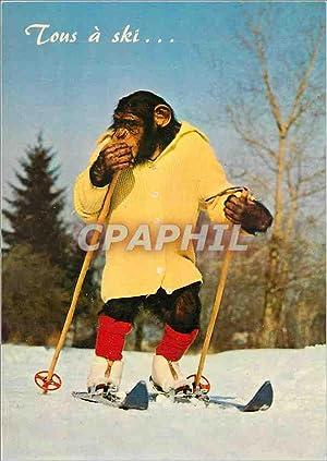 Carte Postale Moderne Animaux singe Ski Chimpanze
