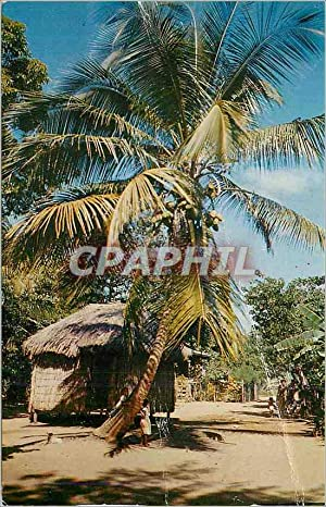 Carte Postale Moderne Greetings from Martinique