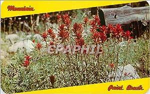 Carte Postale Ancienne Indian Paint Brush Flower