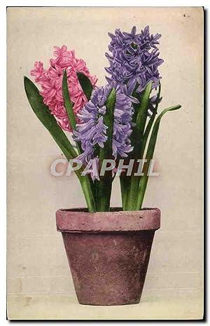 Fleurs - Flowers - pot of bulb
