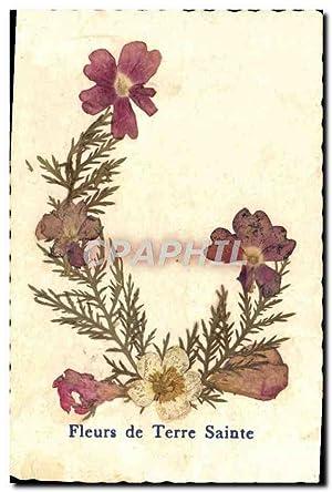 Carte Postale Ancienne Fleurs de Terre Sainte
