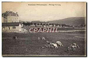 Carte Postale Ancienne Vernoux Pittoresque Paturage Pre Long