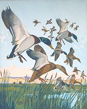 Flight of mallards descending into marshland, two hunters in the distance