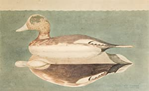 Male Widgeon Decoy: watercolor of a Stevens: Barber, Joel D.