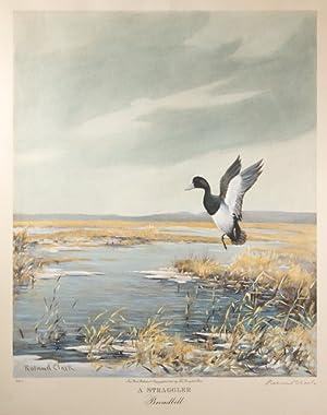A Straggler. Broadbill: Clark, Roland