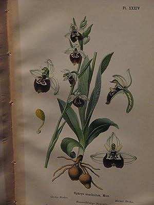 Album des Orchidees: Correvon, H.