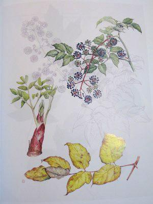 Vuuga: Contemporary Botanical Watercolors from Japan (Catalogue of an Exhibition, March 23rd-June ...