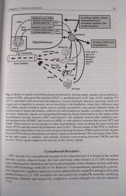 Treatment of the Obese Patient (Contemporary Endocrinology): Kushner,Robert F.; Bessesen, Daniel H.